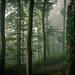 Swiss Forest by daniel.frauchiger
