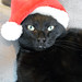 For Christmas, Darwin would like to own a human who doesn't own a Santa cap!! by sweetp_sqrd