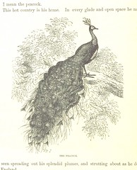 Image taken from page 256 of 'The World at Home; or, pictures and scenes from far off lands'