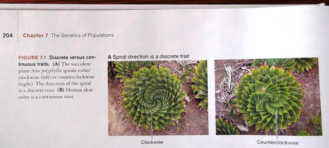 The succulent Aloe polyphylla spirals clockwise or counterclockwise