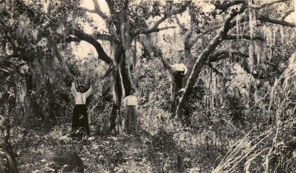 Koreshans among the Live Oaks on Estero Island, Florida
