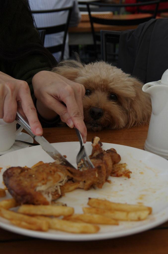好吃的小犬