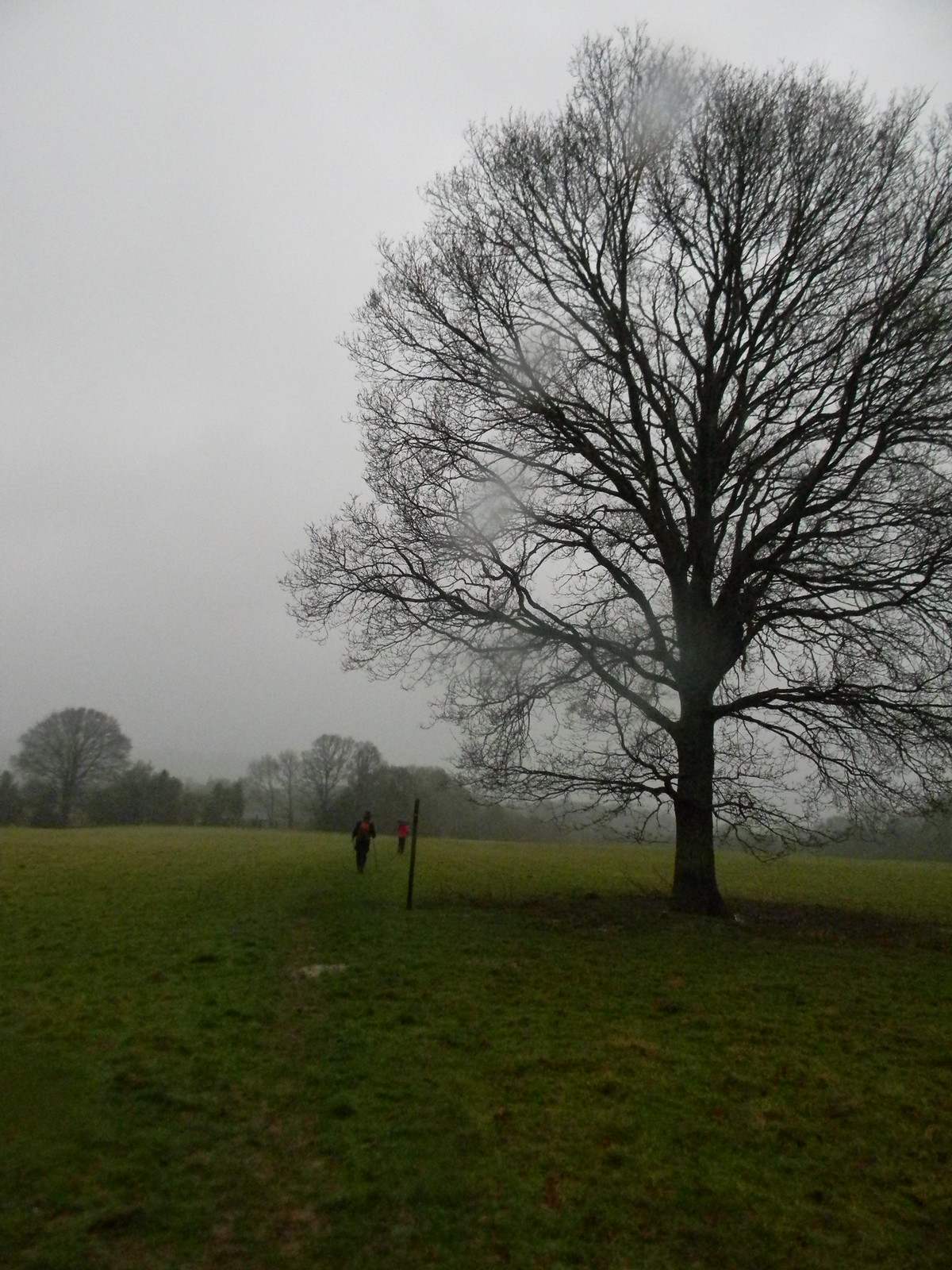 Tree in the rain Robertsbridge Short Circular