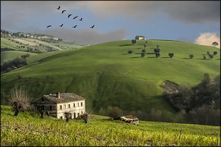 Campagna picena (Marche Italy)