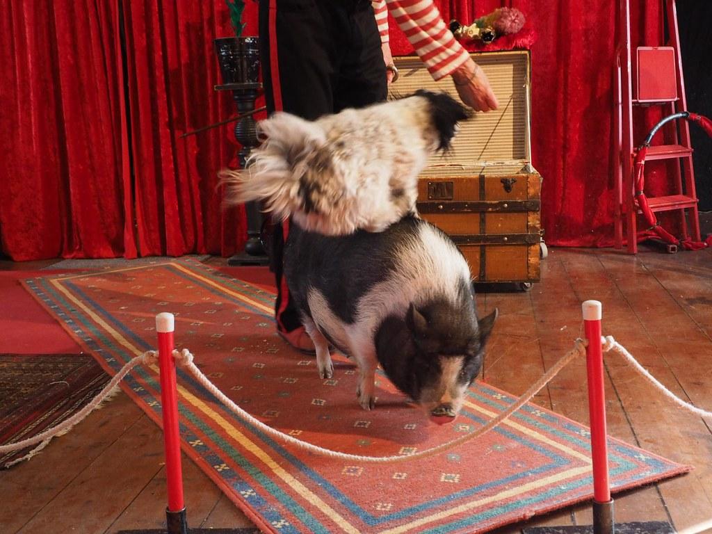 Cirkus og brunch med Kåre og Agnes