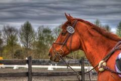 Horses - 2014 Itl Horse Trials, Norwood, NC
