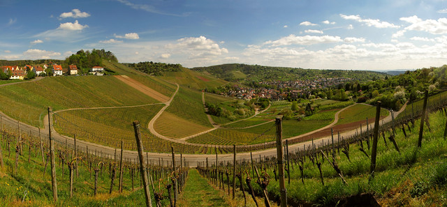 Uhlbach surrounded by Vineyards
