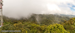 Mount Brinchang Cameron Highlands_Panorama1-s