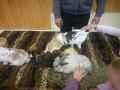 Animal Petting at the Easter Fun session