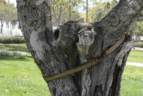 Árbol torturado