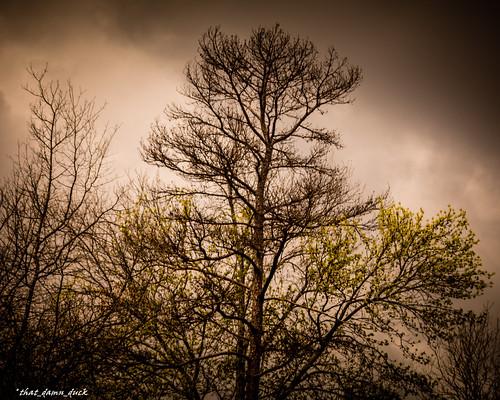 nature tree springtime sundown sunset