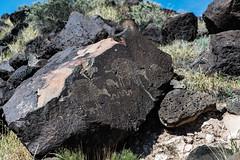 Grazing Petroglyphs
