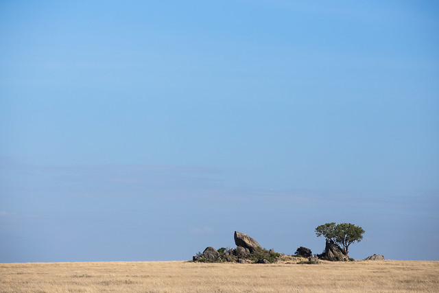 The Plains of the Serengeti