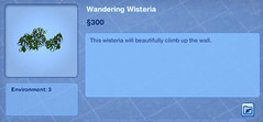 Wandering Wisteria