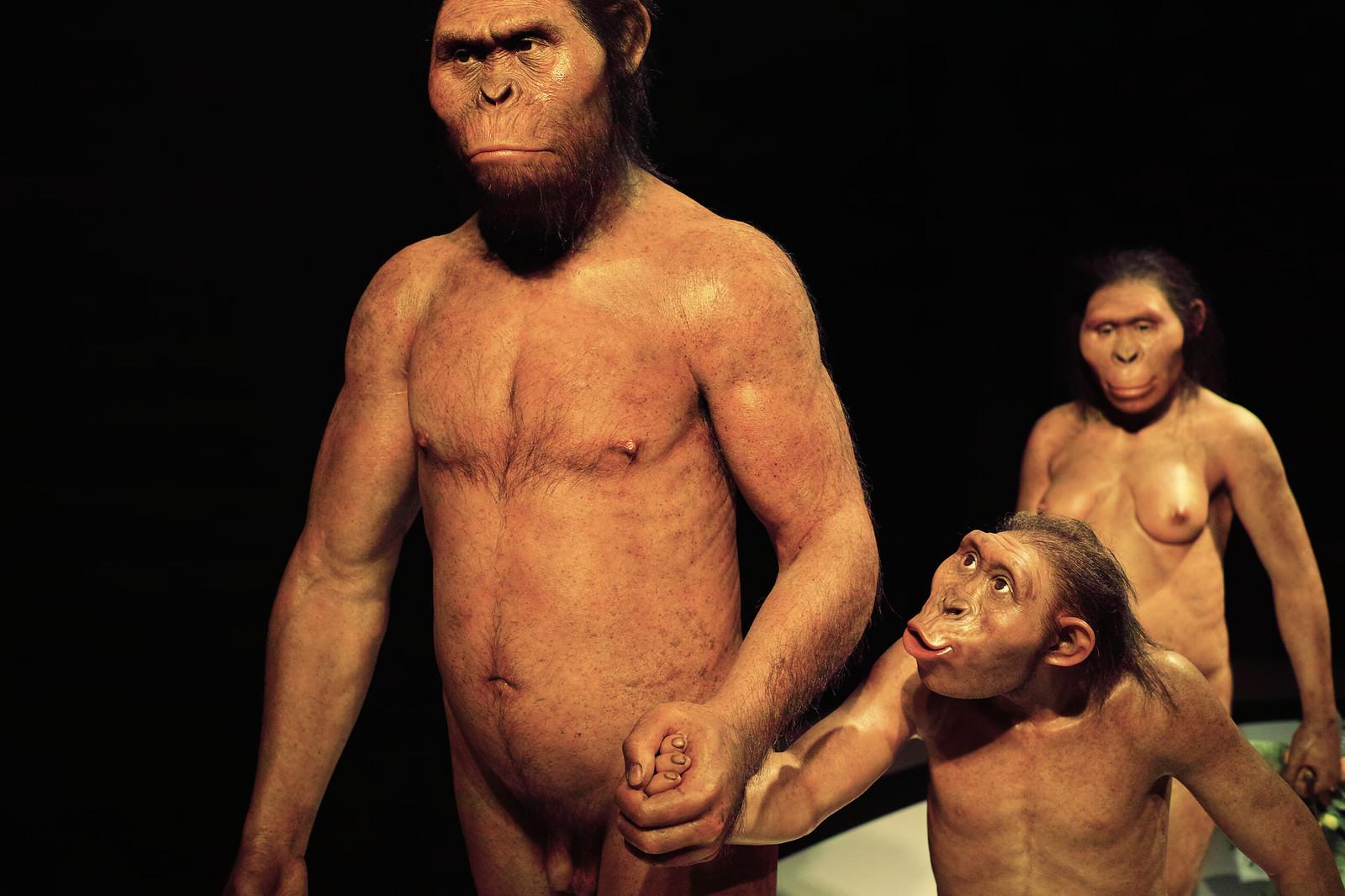 Australopithecus afarensis family