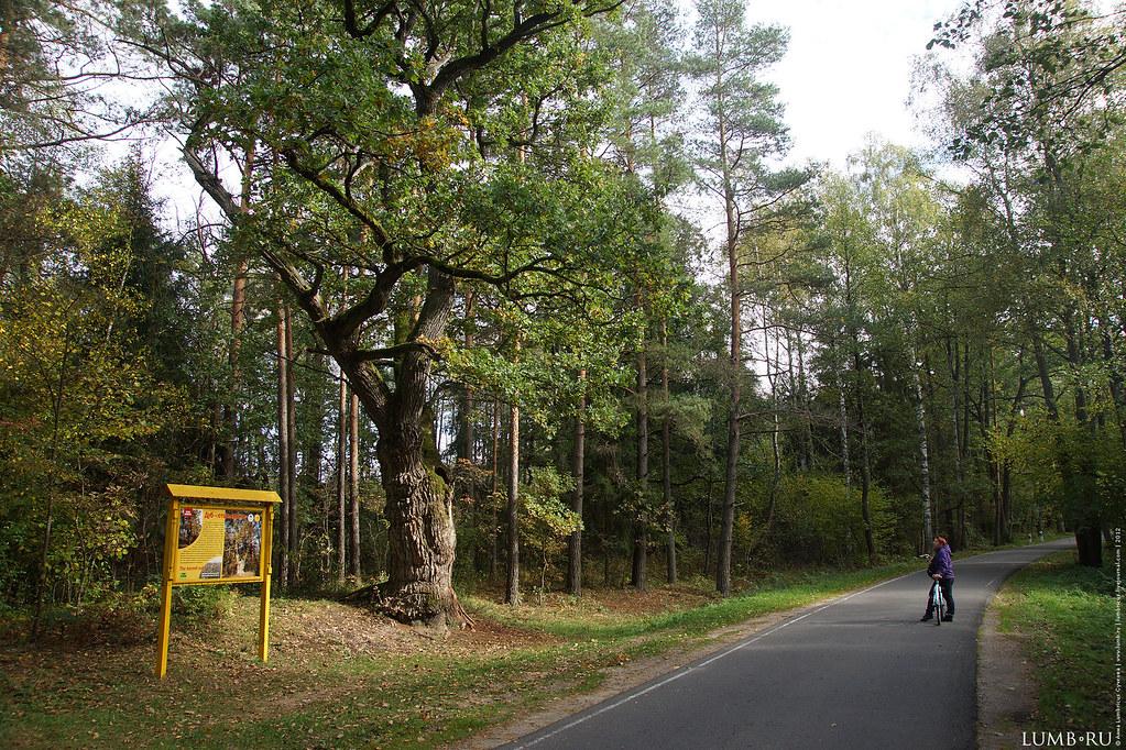 2012.10.06 Bielavezhskaya Pushcha