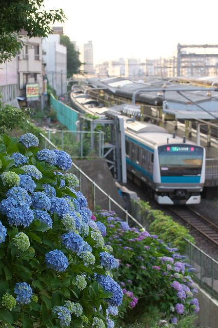 Tokyo Train Story