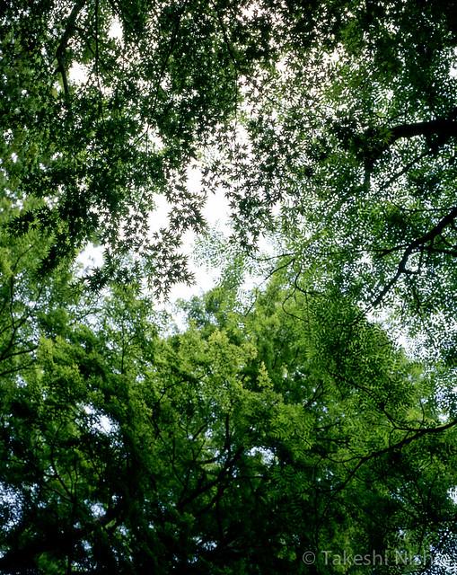 葉 / Leaves