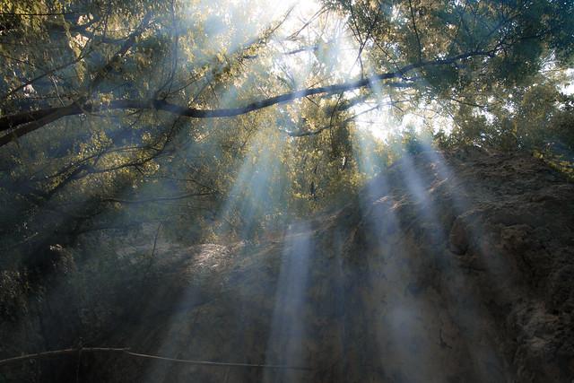Le feu de camp dans la forêt