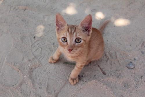Ayia Napa: cucciolo di gatto