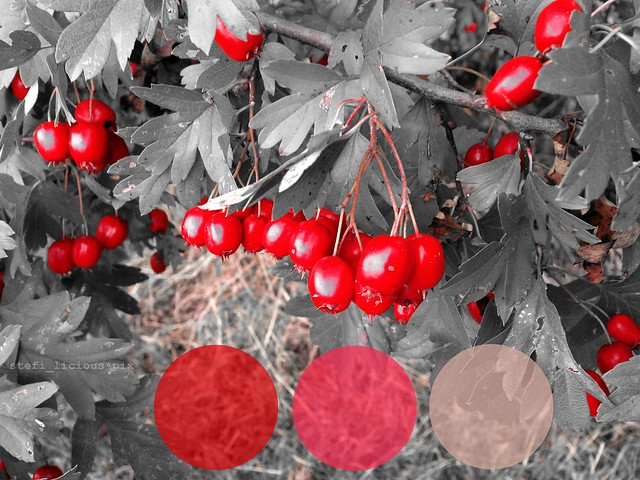 herbst_farbe1