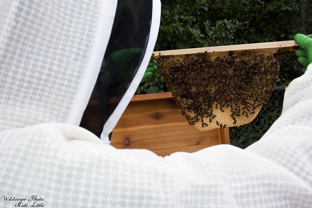 hive6