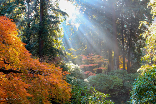 autumn fall oregon portland japanesegarden portlandor capture sunrays