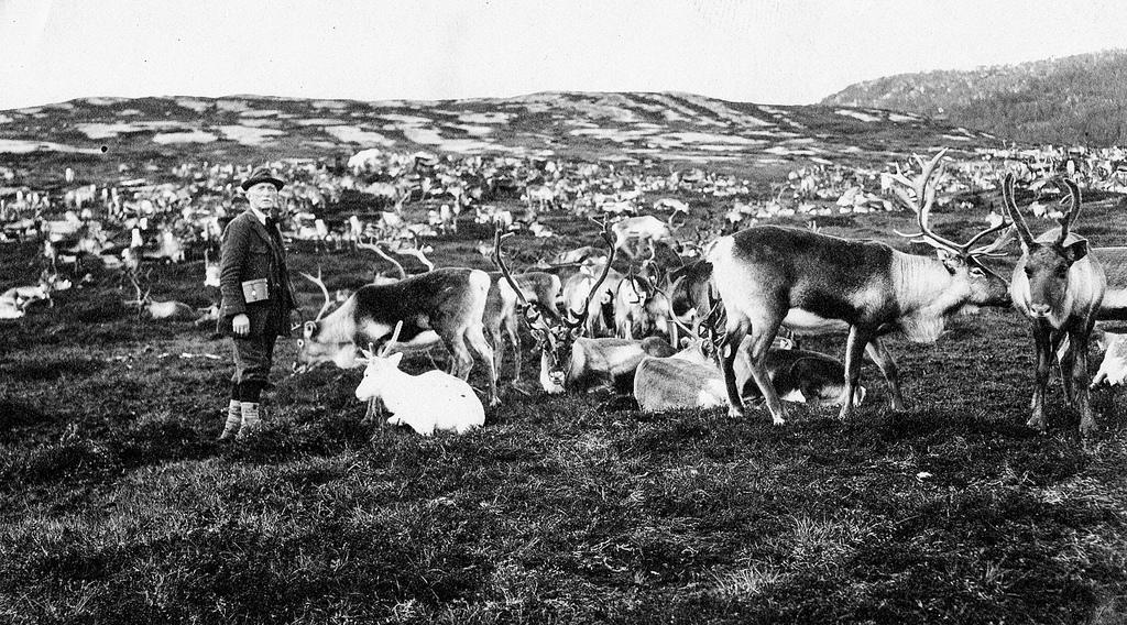 26. Investigador entre renos. Principios del siglo XX. Tromso, Noruega. Autor, Perspektivet Museum
