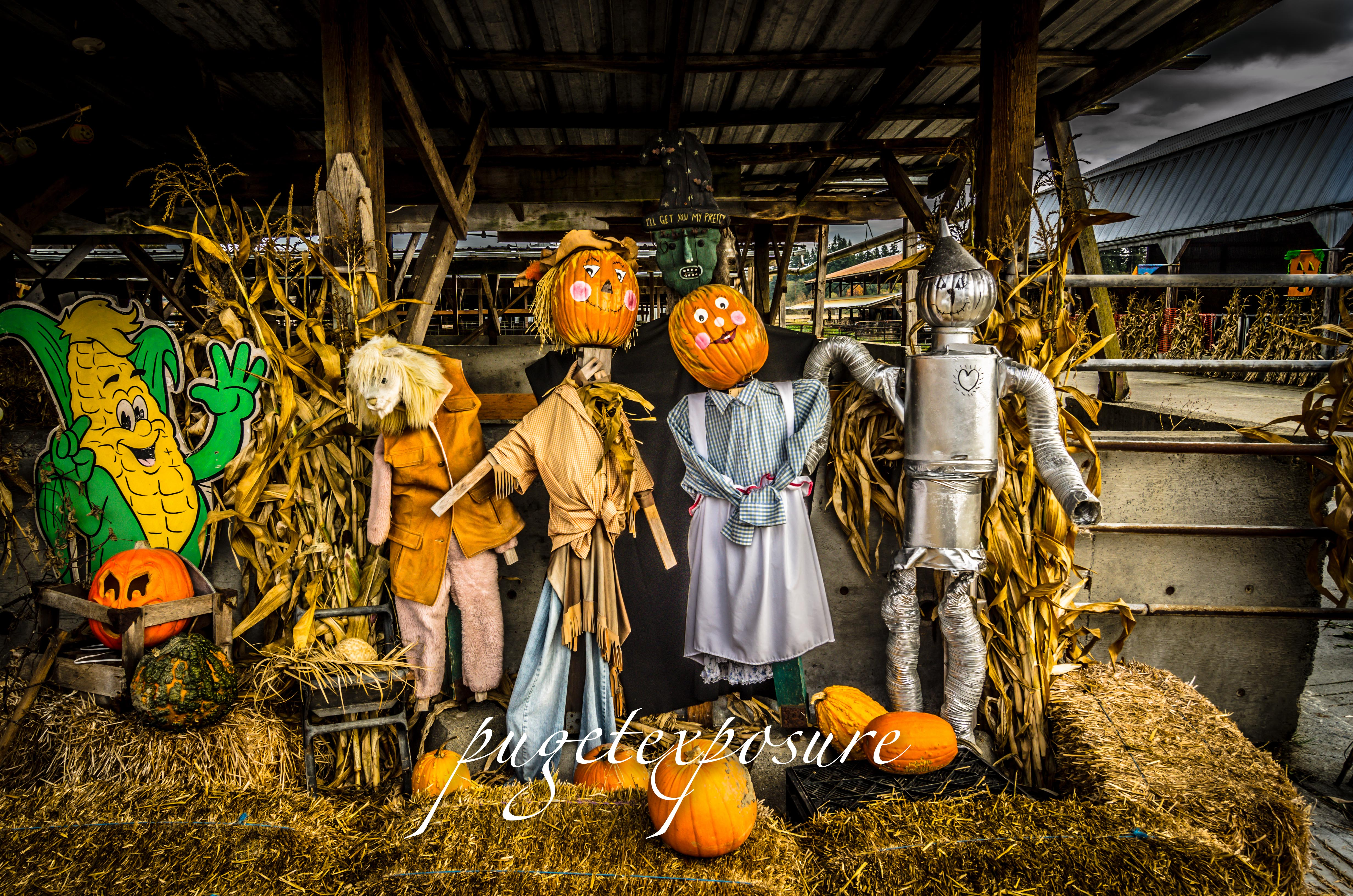 Wizard of OZ Pumpkin Scene