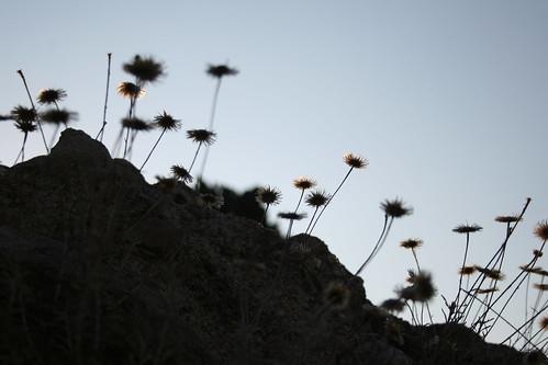 sunset summer flower stone flora greece grecia