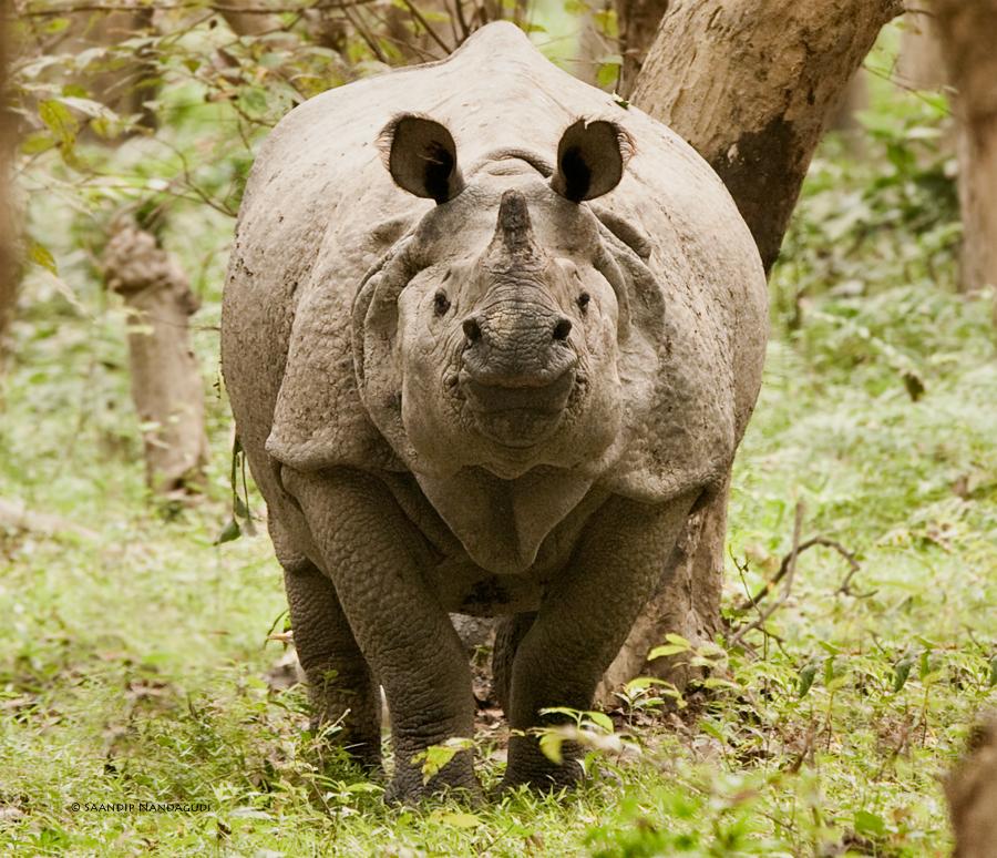 Rhino-col8