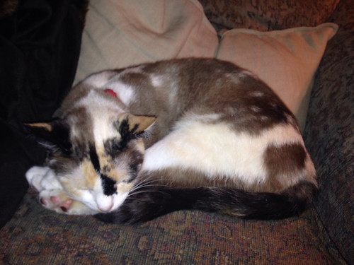 Remarkable, Flikr sleeping hairy pussy
