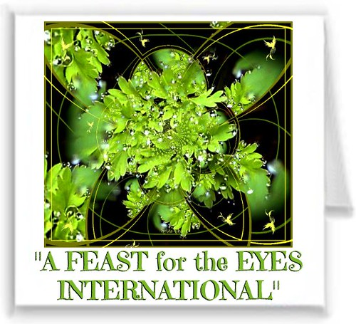 A FEAST for the EYES INTERNATIONAL