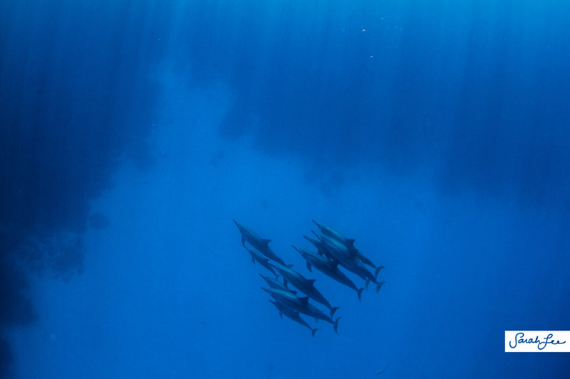 hawaii_underwater_dolphins_011.jpg
