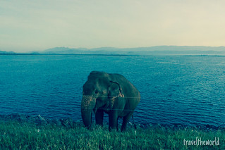 Jeep elefante