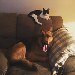 Cat got your tongue 👅