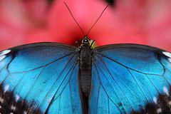 Papillons en Liberté 2017 - Photo 40