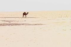 Kuwait - الكويت
