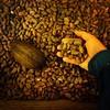 Lo que se llama cacao