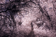Infrared Texas 2017 (27 of 29)