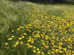 My walk on the Ribera pathway/Carmel Meadows