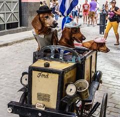Driving Miss Daisy, Havana, Cuba.