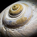 Spiral Snail by Carlos V. - Alcona Amateur Photographer