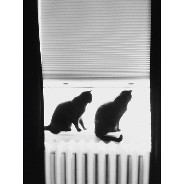 These two are why we have to keep the windows working. They are very demanding.  #pictapgo_app