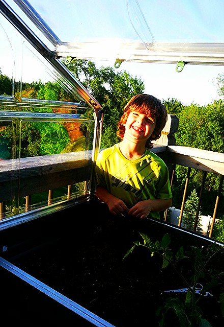 dr aaronson plants crops in his urban greenhouse