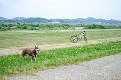 Kakogawa river side