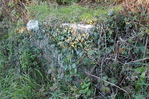 Stondin Laeth islaw Panteryrod, Llwyncelyn