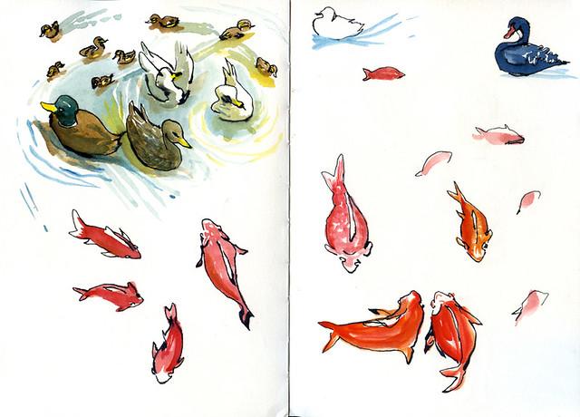 huesca-patos-y-peces