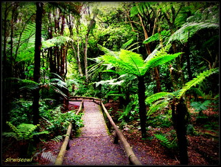 A Walk In A Fern Garden
