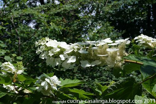 Blumen CentralPark